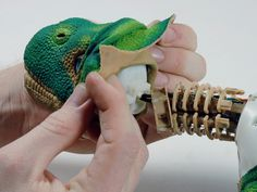 Pleo tear down in stages