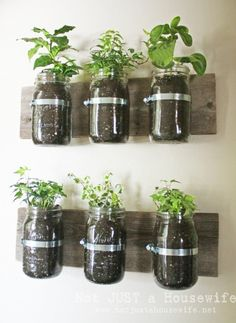 Mason Jar Wall Planter - hang it in the kitchen and plant some herbs!