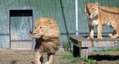 http://www.medemblikactueel.nl/masrya-5-en-nero-3-krijgen-hun-vrijheid-terug/