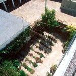 crack garden.