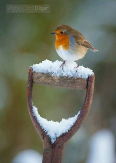 Little Robin helps shovel snow. Source: Tony and Carol Dilger