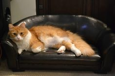 Spoiled kitty has his own leather couch Discovery Channel, Cat Castle, Comfy Bed, Cat Sleeping, I Love Cats, Cats And Kittens, Kitty Cats, Life Is Good, Cute Animals