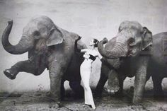 Dovima with Elephants Photography by Richard Avedon, 1955. Dior: The Legendary Images at Granville's Musée Dior.