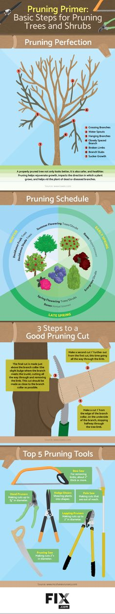 Learn the basics of pruning and get your yard in tip-top shape!