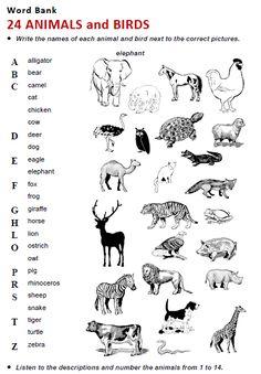 animal sounds worksheets animales weather animal worksheets worksheets english for beginners. Black Bedroom Furniture Sets. Home Design Ideas