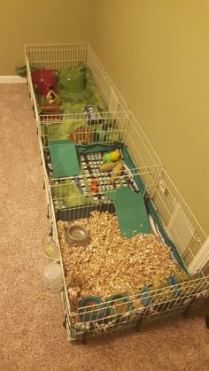 Buy The Right Size Guinea Pig Cage. Photo by maskarade Purchasing a guinea pig cage in a pet shop is unfortunately a good way to ensure that it is in fact too small for your pet's needs. Guinea Pig Hutch, Guinea Pig House, Pet Guinea Pigs, Guinea Pig Care, Pet Pigs, Bunny Cages, Rabbit Cages, Hamsters, Pet Rodents