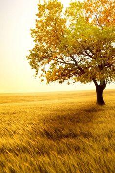 Autumn…so pretty. Looks so peaceful...