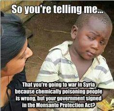 Gmo syria