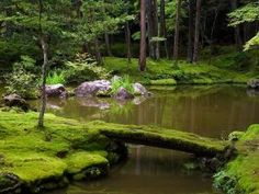 Moss Garden in Kyoto .Moss Garden in Kyoto Japanese Garden Landscape, Japanese Rock Garden, Japanese Gardens, Bamboo Garden, Moss Garden, Japanese Garden Design, Garden Landscape Design, Landscape Architecture, Landscaping Images