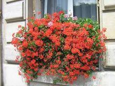 Resultado de imagem para janelas floridas de paris
