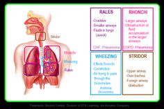 A common issue that a lot of EMS personnel have issues with, is checking lung sounds. Lungs sounds can be a vital tool to identifying what i...