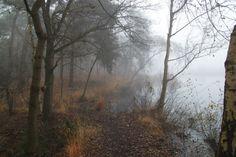 forest_stock_1_by_puckrietveldstock-d70bpir.jpg (4752×3168)