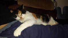 Tapsi Katze | Pawshake