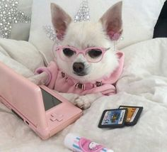 Trendy ideas for dogs memes chihuahua Cute Animal Memes, Cute Funny Animals, Funny Cute, Baby Animals Super Cute, Cute Little Animals, Baby Animals Pictures, Cute Animal Pictures, Funny Dog Memes, Funny Dogs