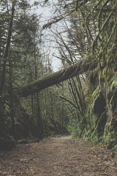 Forbidden Forest ➾ Luke Gram