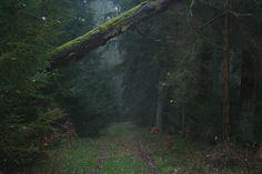 Der Aberglaube vom Wald und seinen Farnen Vorab gesagt Farne blühen nicht und haben auch keine Samen, weil sie Sporenpflanzen sind. Ihre Lieblingsplätze sind schattige, feuchte und dunkle Wälder. Daher ranken um dieses Kraut soviel Aberglauben und Legende. Wer auf einem Farn tritt, der irrt im Wald umher und wird vom Teufel gejagt. Ein Aberglaube besagt, das der Farn nur um Mitternacht […]