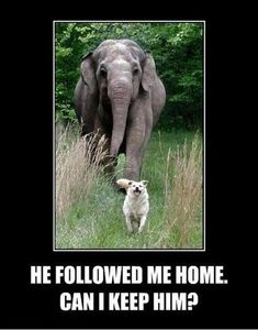 funny pictures, dog and elephant I can totally see Sam doing this...with a skunk...