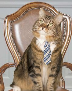 The 2012 presidential campaign was filled with memorable moments, good, bad and just plain bizarre. How To Memorize Things, Campaign, Politics, Funny, 233, Pajamas, Teal Tie, Dios, Gatos