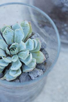 Une plante grasse dans un terrarium