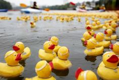 Richmond Duck Race raises money for charity How To Raise Money, Charity, Racing, River, Google Search, Food, Running, Auto Racing, Essen