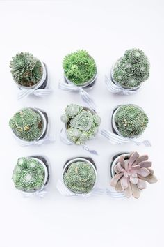DIY succulent place cards.
