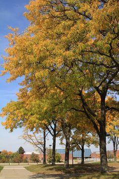 Beautiful succession of trees