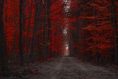 Forest. by Jacek Jędrzejczak on 500px