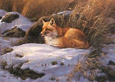 Restful Moment-Red Fox Art Print by Rosemary Millette Wildlife Paintings, Wildlife Art, Animal Paintings, Animal Drawings, Fox Illustration, Illustrations, Art Fox, Image Halloween, Fox Painting