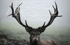 Geometric Deer on Behance