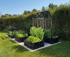 How to Make a Simple Garden Planter Box. Grow your own veggies this year with a simple garden box. You can use the box for years to come for healthy homegrown vegetables! Backyard Vegetable Gardens, Potager Garden, Vegetable Garden Design, Backyard Patio, Backyard Landscaping, Outdoor Gardens, Garden Planter Boxes, Box Garden, Vegetable Planter Boxes