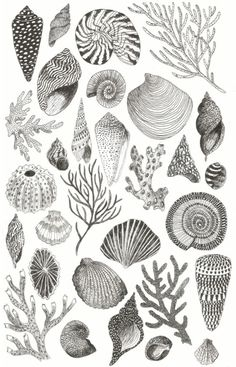Caitlin Foster Shells-Plakat, 2015 - Lern how to. Art And Illustration, Ocean Tattoos, Sea Tattoo, Watercolor Ocean, Tattoo Watercolor, Shell Art, Art Inspo, Line Art, Sea Shells