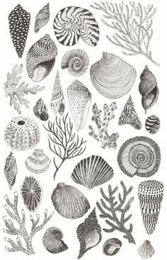 Caitlin Foster Shells-Plakat, 2015 - Lern how to. Art And Illustration, Ocean Tattoos, Sea Tattoo, Watercolor Ocean, Tattoo Watercolor, Shell Art, Art Plastique, Art Inspo, Line Art