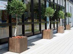 Corten Steel, Backyard, Patio, Green Plants, Planters, Sidewalk, Display, Garden, Outdoor Decor