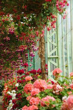 Red and Pink Climbing Flower Garden