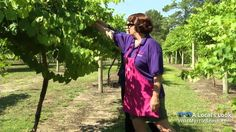 A visit to La Belle Amie Vineyard, a local favorite in Little River, SC, tops off any stay in the Myrtle Beach area!