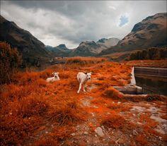 Amazing orange in the Andes of #Ecuador! #Travel #Nature