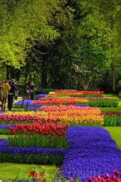 Keukenhof Gardens, The Netherlands. #Keukenhof #flowers #Holland