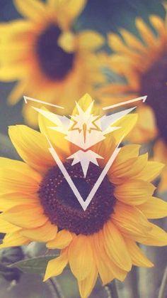 Team Instinct, Pokemon Go, Pokemon, sunflower, wallpaper, background, floral, girly