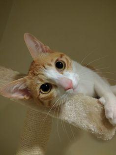 A really good photo of my Japanese cat http://ift.tt/2opDMeR
