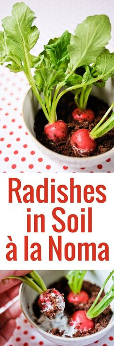 Looking for an easy but wowing way to serve radishes? These radishes in soil feature herbed cheese and bread as the soil, inspired by a René Redzepi creation.