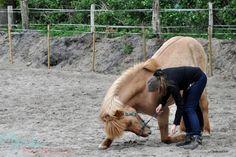 Darum sind Zirkustricks mit dem Pferd so toll