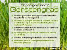Schon gewusst? Interessante Infos zu unserem Superfood Gerstengras das grüne…