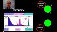 immune system - YouTube
