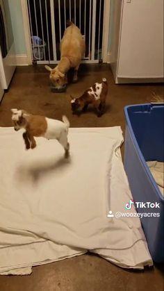 Clarissa Bertha Dog Groomer Toddler Baby Girls Short Sleeve Ruffle T-Shirt