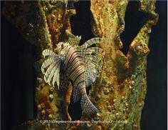Virginia Aquarium - Virginia Beach