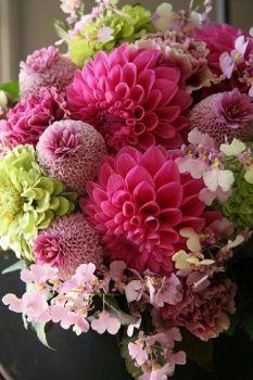 Cut Flowers, Fresh Flowers, Beautiful Flowers, Beautiful Flower Arrangements, Floral Arrangements, Sempervivum, Floral Artwork, Ornamental Plants, Zinnias