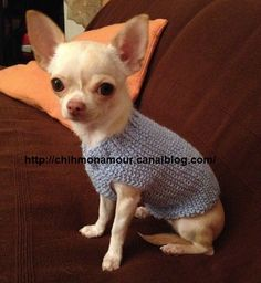 Sample for straightforward knit sweater Chihuahua mon amour Crochet Dog Sweater Free Pattern, Knit Crochet, Post Animal, Dog Clothes Patterns, Cute Chihuahua, Cat Sweaters, Puppy Clothes, Cat Accessories, German Shepherd Dogs