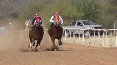 HORSE     RACES     SHOW