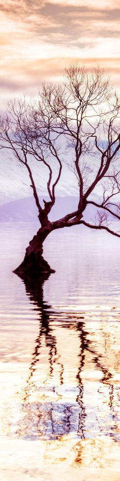 """Tree in Wanaka, New Zealand - from the Exhibition: """"Cropped for Pinterest"""" - photo from #treyratcliff Trey Ratcliff at http://www.StuckInCustoms.com"""