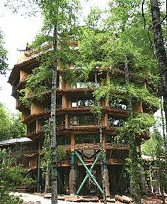 Baobab tree hotel in Huilo Huilo, Chile